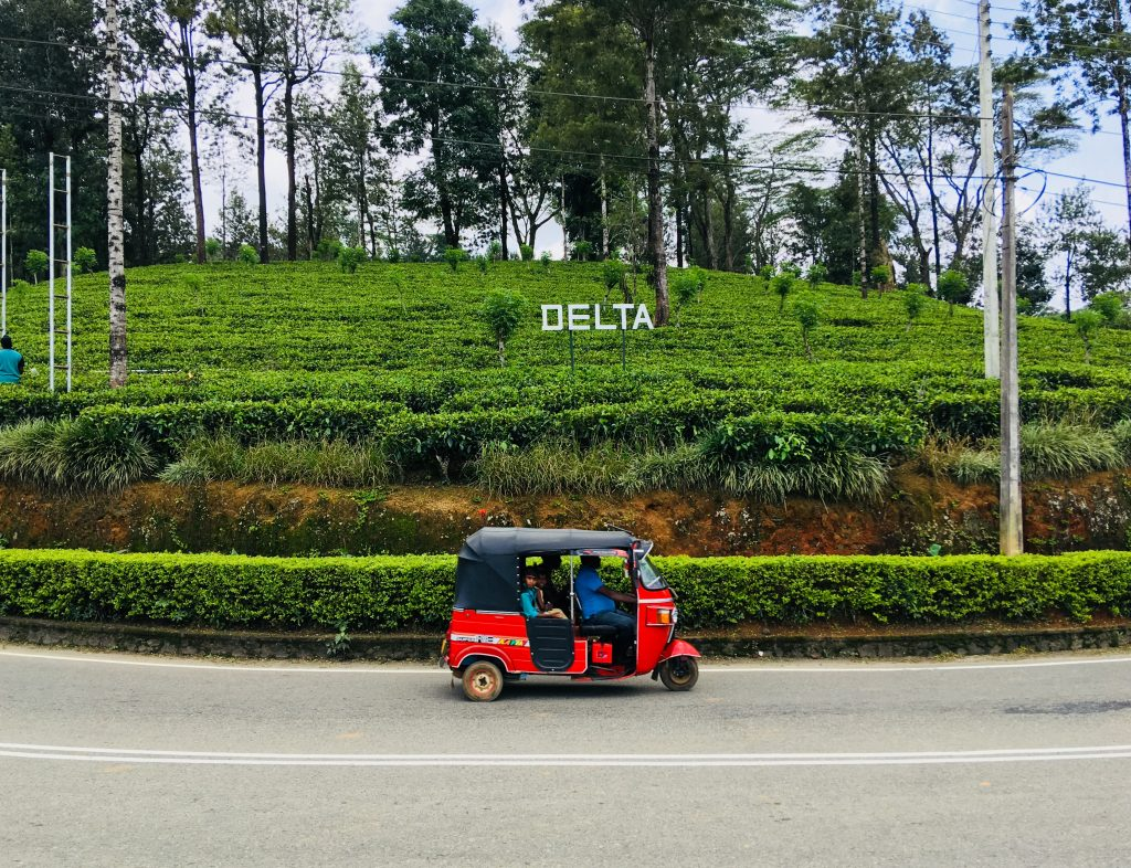 Piantagioni di tè, tappa del nostro itinerario in 13 giorni in Sri lanka