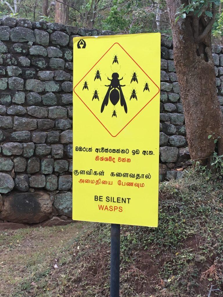 Pericolo vespe nel nostro itinerario di 13 giorni in Sri Lanka